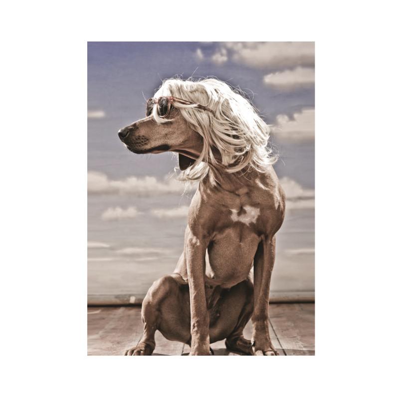 Evo Salty Dog Display Card